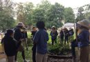 Music, Food, Gardens, and Bees: Curbside Chef's Harvest Festival with the Green Team